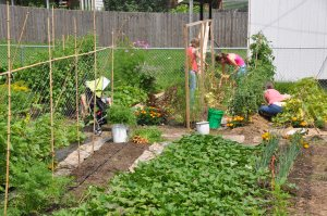 Lesley and Emily cleared the pea bed while Pam tended (her) tomatoes.