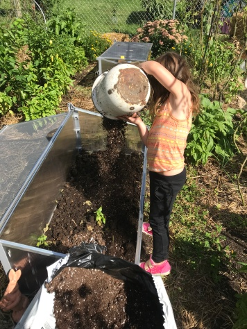 September 16, 2017: A wee neighbor helps add potting soil to the base of the frame. (about an inch)