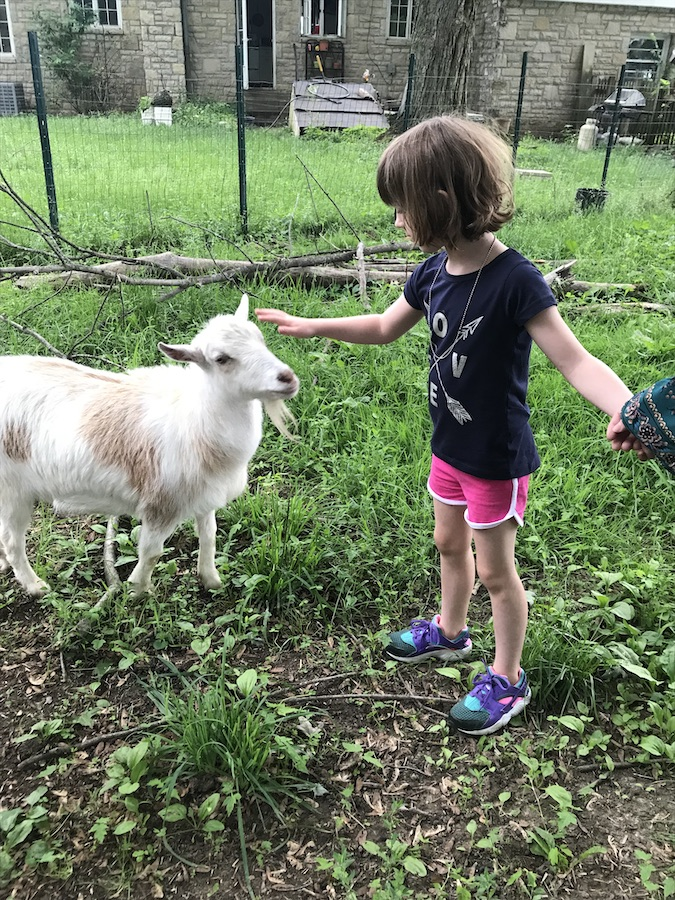 Over the Fence Urban Farm | Cooperatively farming small
